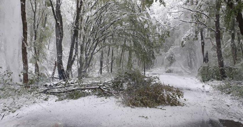 Kidőltek a fák az áprilisi havazás miatt