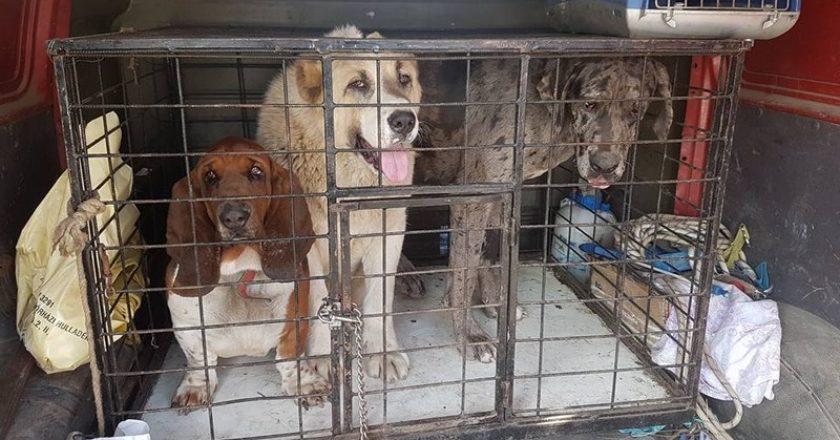 Kóbor kutyák Kosdon
